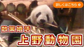 散策婚活上野動物園