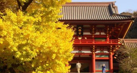 鶴岡八幡宮-紅葉