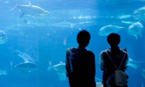 カップル 水族館