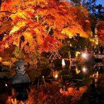 長谷鎌倉ライトアップ